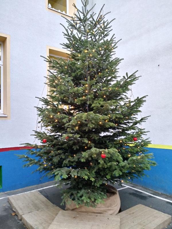 Tannenbaum Singen.Nikolausschule 2018 11 28 Tannenbaum Wird Aufgestellt